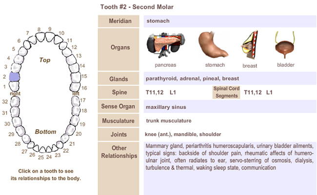 Meridian Tooth Chart link